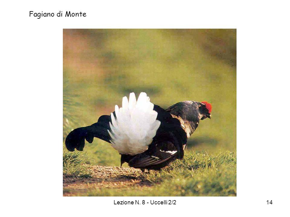 Lezione N. 8 - Uccelli 2/214 Fagiano di Monte