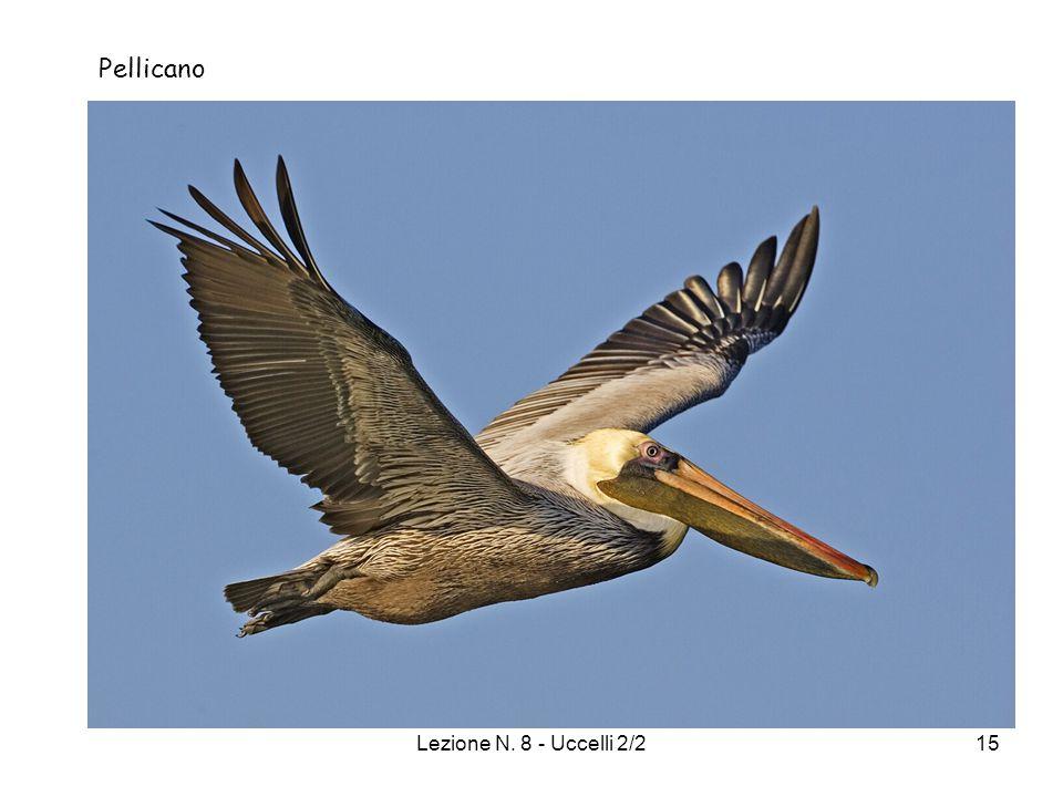 Lezione N. 8 - Uccelli 2/215 Pellicano