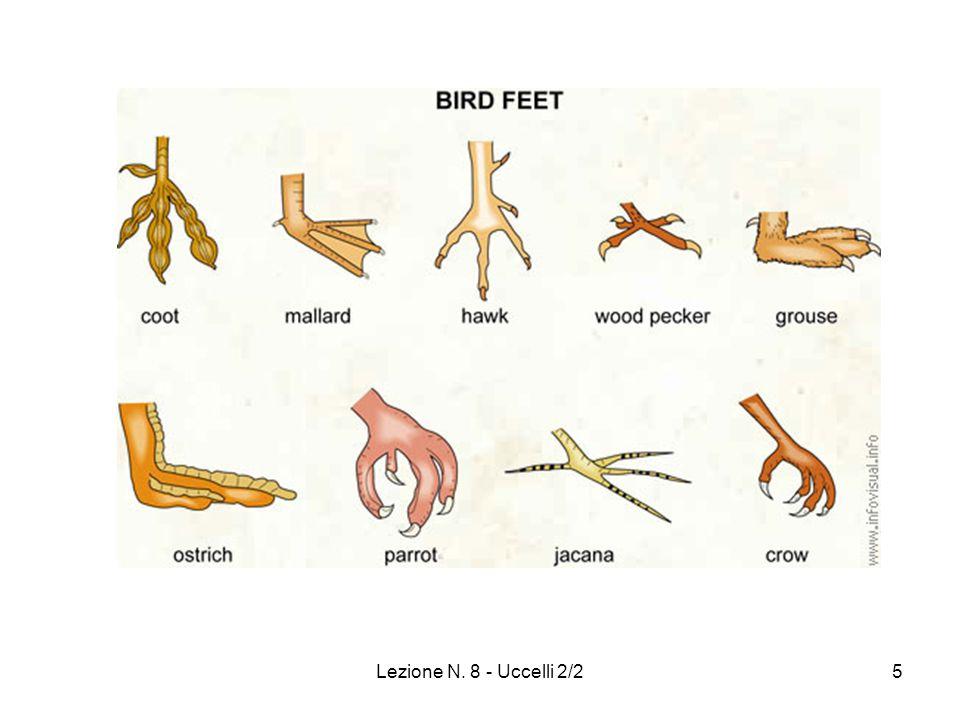 6 Uccelli (Colorazione)  MELANINE: pigmenti piu' diffusi (nero, grigio, bruno) :cromatofori  CAROTENOIDI: colori giallo e rosso (importanza alimentazione)  TURACINA: macchia rossa sulle ali che puo' stingere (Cuculiformi).