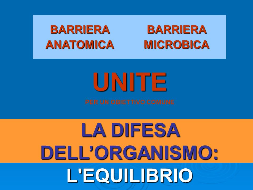 BARRIERA ANATOMICA BARRIERA MICROBICA UNITE PER UN OBIETTIVO COMUNE LA DIFESA DELL'ORGANISMO: L EQUILIBRIO