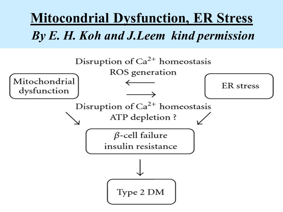 Mitocondrial Dysfunction, ER Stress By E. H. Koh and J.Leem kind permission