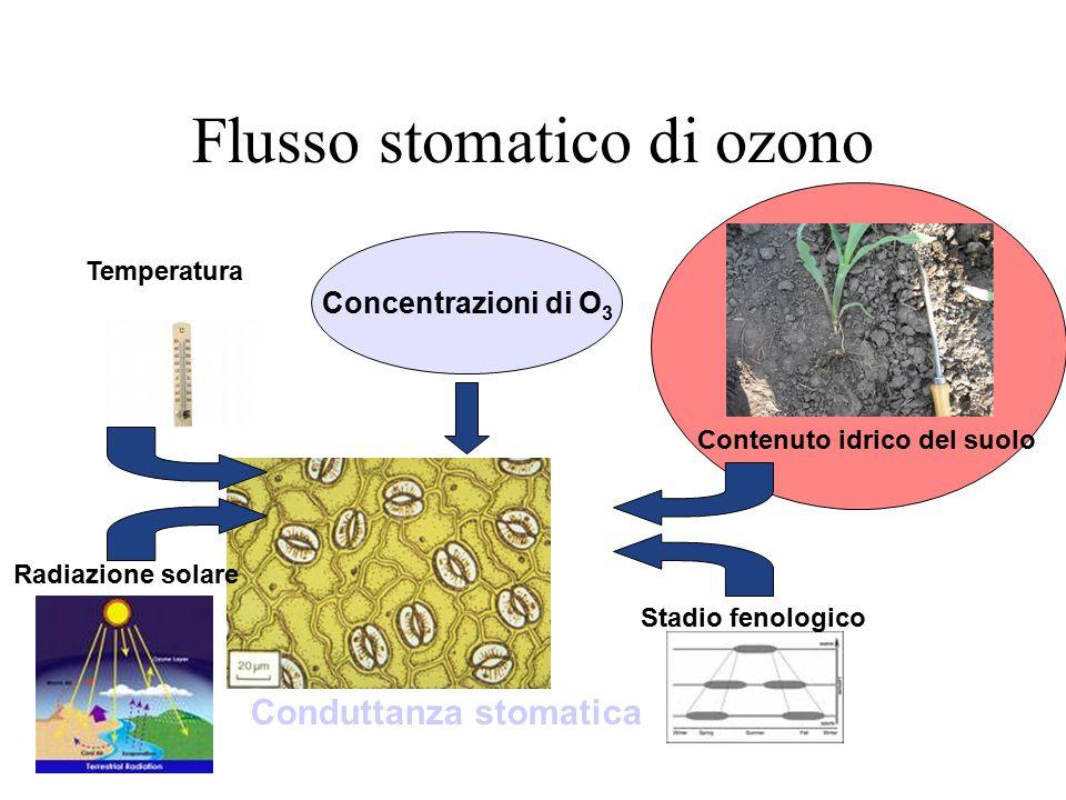 Flusso stomatico di ozono Contenuto idrico del suolo Stadio fenologico Temperatura Radiazione solare Concentrazioni di O 3 Conduttanza stomatica