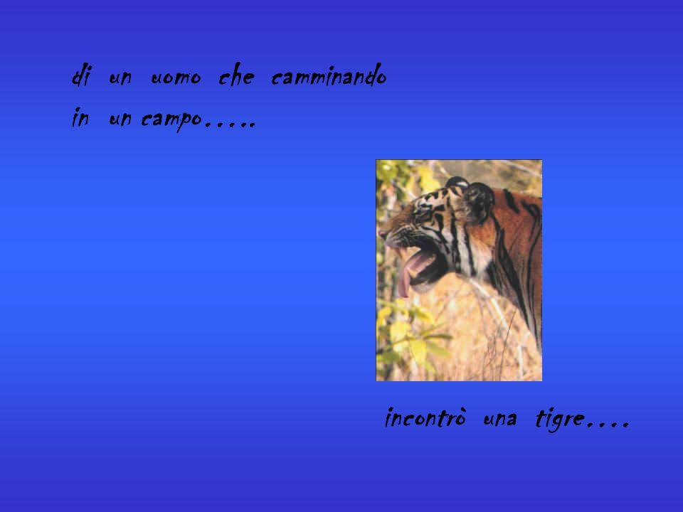 di un uomo che camminando in un campo….. incontrò una tigre….