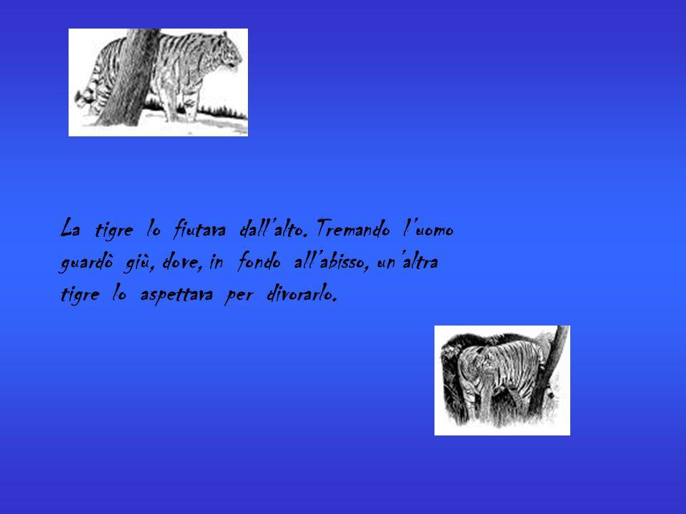 La tigre lo fiutava dall'alto. Tremando l'uomo guardò giù, dove, in fondo all'abisso, un'altra tigre lo aspettava per divorarlo.