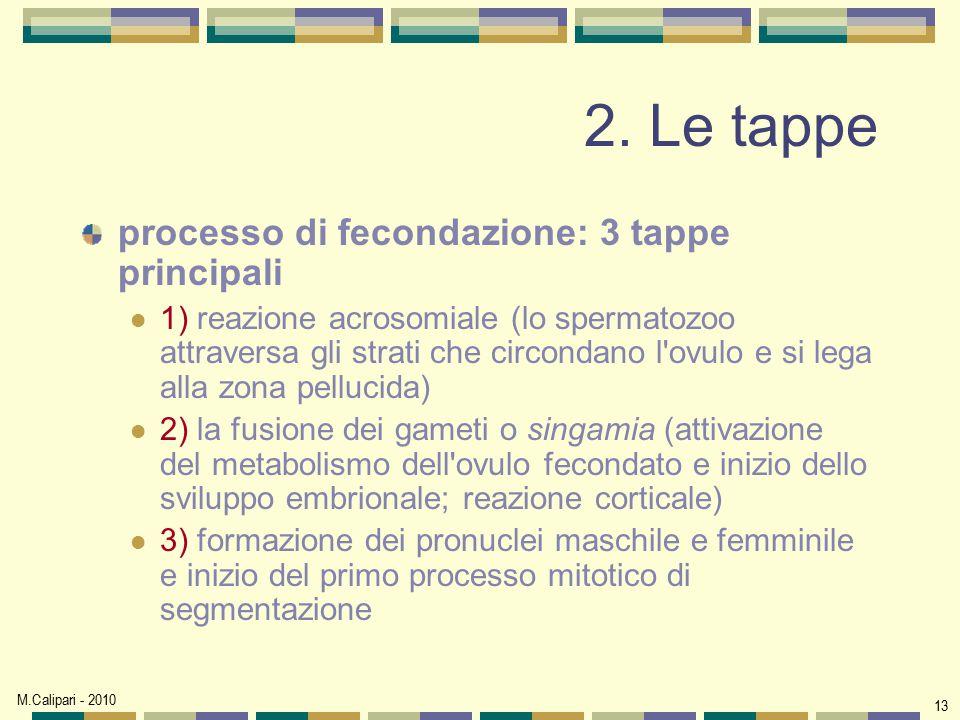 M.Calipari - 2010 13 2. Le tappe processo di fecondazione: 3 tappe principali 1) reazione acrosomiale (lo spermatozoo attraversa gli strati che circon
