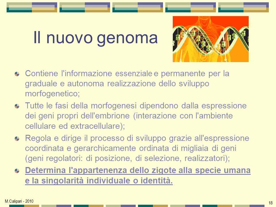 M.Calipari - 2010 18 Il nuovo genoma Contiene l'informazione essenziale e permanente per la graduale e autonoma realizzazione dello sviluppo morfogene