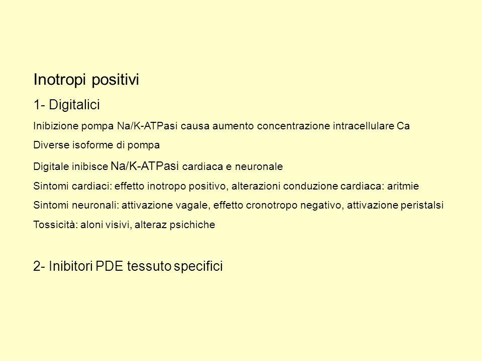 Inotropi positivi 1- Digitalici Inibizione pompa Na/K-ATPasi causa aumento concentrazione intracellulare Ca Diverse isoforme di pompa Digitale inibisc