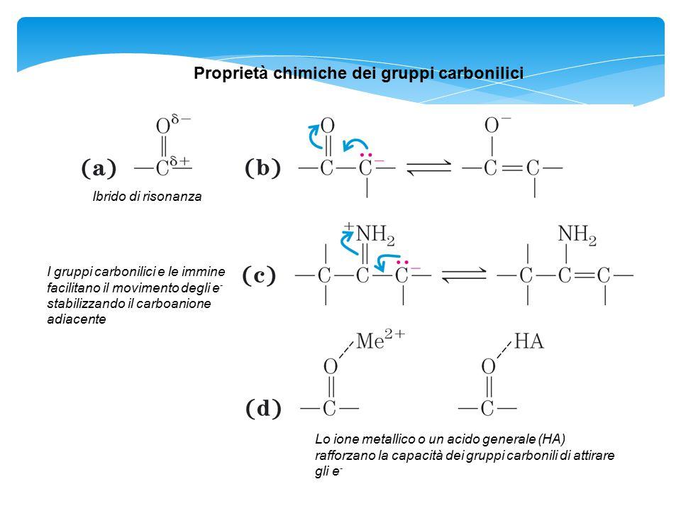 Proprietà chimiche dei gruppi carbonilici Ibrido di risonanza I gruppi carbonilici e le immine facilitano il movimento degli e - stabilizzando il carb