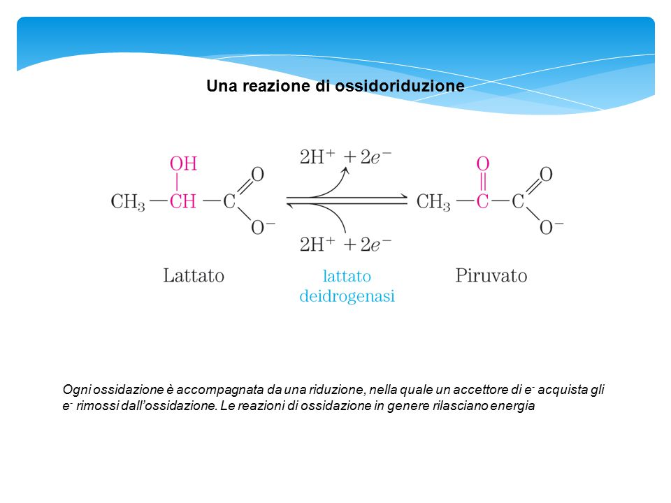 Una reazione di ossidoriduzione Ogni ossidazione è accompagnata da una riduzione, nella quale un accettore di e - acquista gli e - rimossi dall'ossida