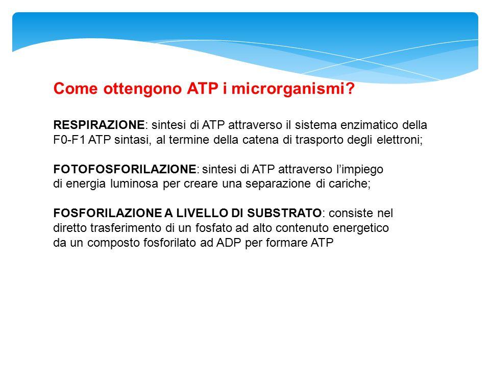 Come ottengono ATP i microrganismi? RESPIRAZIONE: sintesi di ATP attraverso il sistema enzimatico della F0-F1 ATP sintasi, al termine della catena di