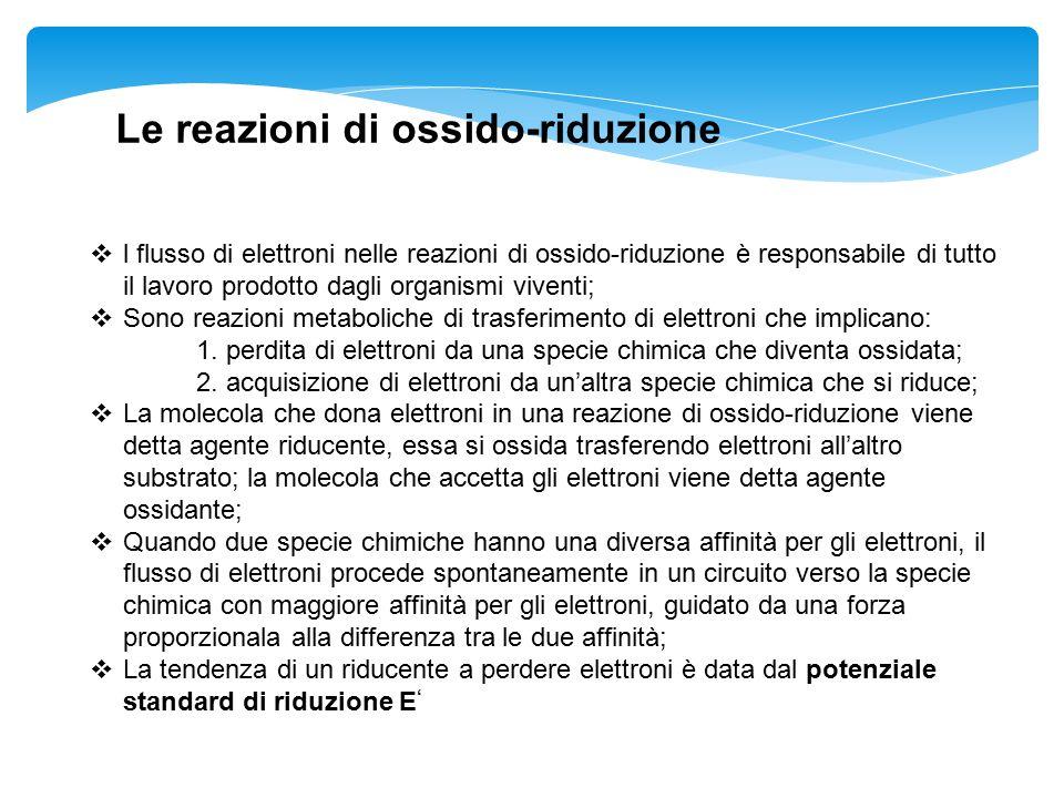  l flusso di elettroni nelle reazioni di ossido-riduzione è responsabile di tutto il lavoro prodotto dagli organismi viventi;  Sono reazioni metabol