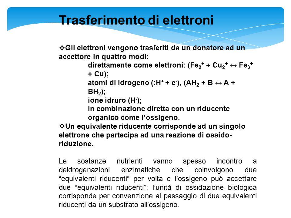 Trasferimento di elettroni  Gli elettroni vengono trasferiti da un donatore ad un accettore in quattro modi: direttamente come elettroni: (Fe 2 + + C