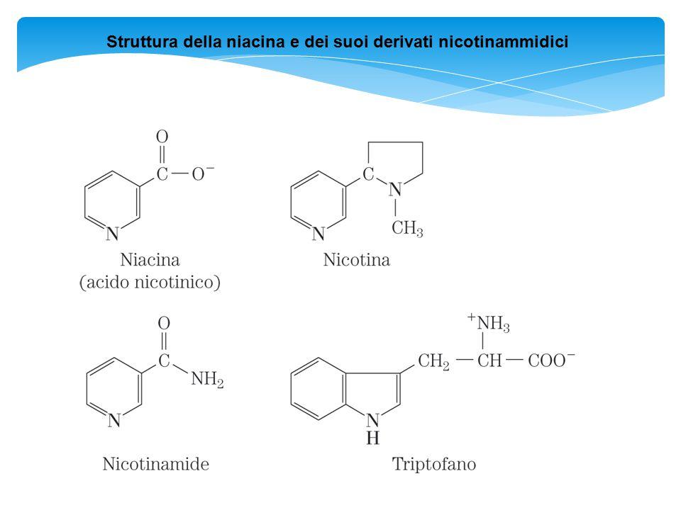 Struttura della niacina e dei suoi derivati nicotinammidici