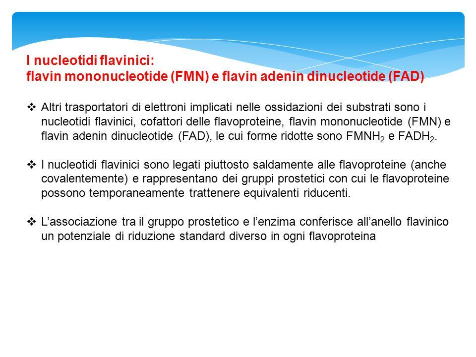 I nucleotidi flavinici: flavin mononucleotide (FMN) e flavin adenin dinucleotide (FAD)  Altri trasportatori di elettroni implicati nelle ossidazioni