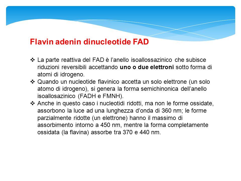 Flavin adenin dinucleotide FAD  La parte reattiva del FAD è l'anello isoallossazinico che subisce riduzioni reversibili accettando uno o due elettron