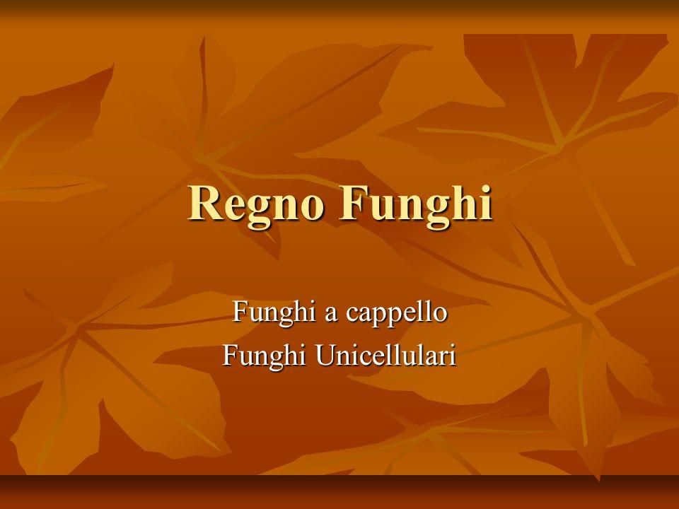 Regno Funghi Funghi a cappello Funghi Unicellulari