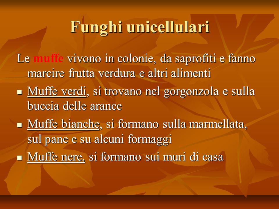 Funghi unicellulari Le vivono in colonie, da saprofiti e fanno marcire frutta verdura e altri alimenti Le muffe vivono in colonie, da saprofiti e fann