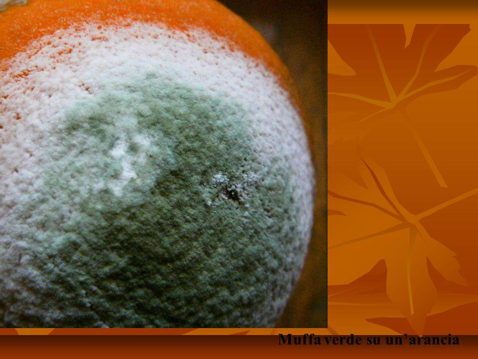 Muffa verde su un'arancia