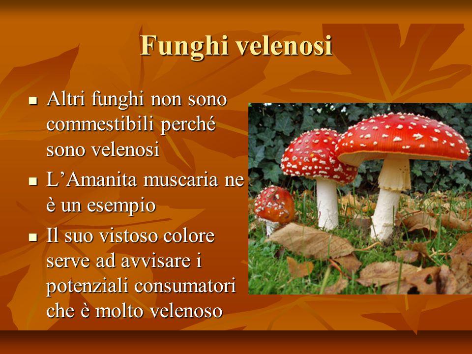 Funghi velenosi Altri funghi non sono commestibili perché sono velenosi Altri funghi non sono commestibili perché sono velenosi L'Amanita muscaria ne