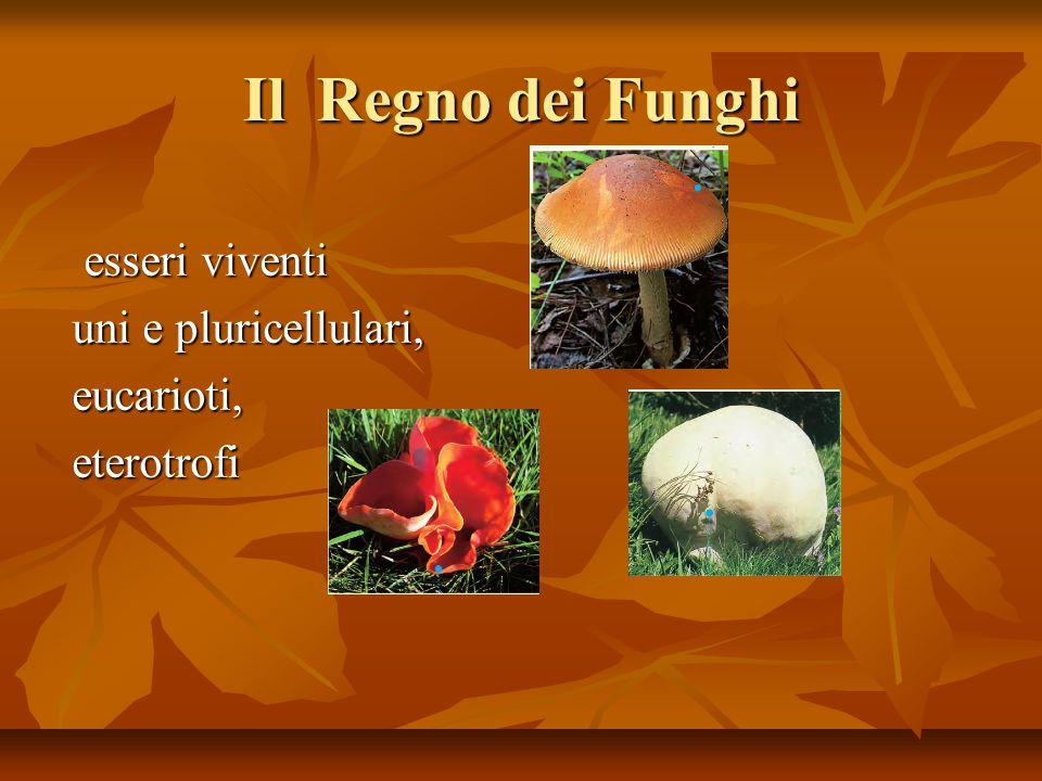 Il Regno dei Funghi esseri viventi esseri viventi uni e pluricellulari, eucarioti,eterotrofi