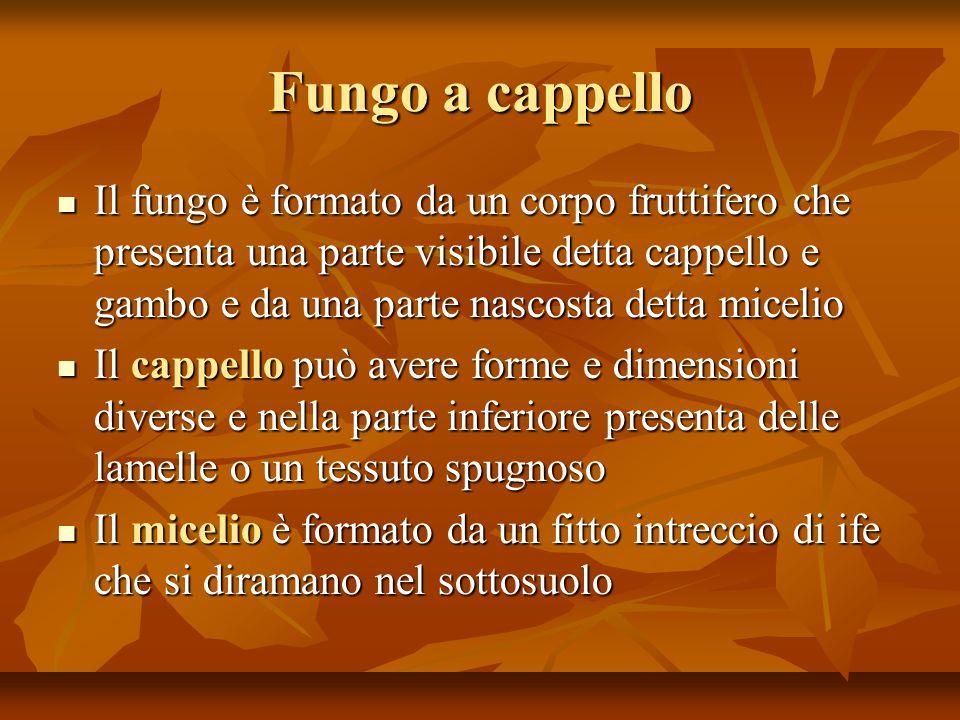 Fungo a cappello Il fungo è formato da un corpo fruttifero che presenta una parte visibile detta cappello e gambo e da una parte nascosta detta miceli