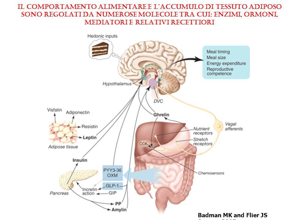 Badman MK and Flier JS Science 2005 IL COMPORTAMENTO ALIMENTARE E L'ACCUMULO DI TESSUTO ADIPOSO sono REGOLATI da NUMEROSE molecole tra cui: enzimi, ormoni, MEDIATORI e RELATIVI RECETTIORI
