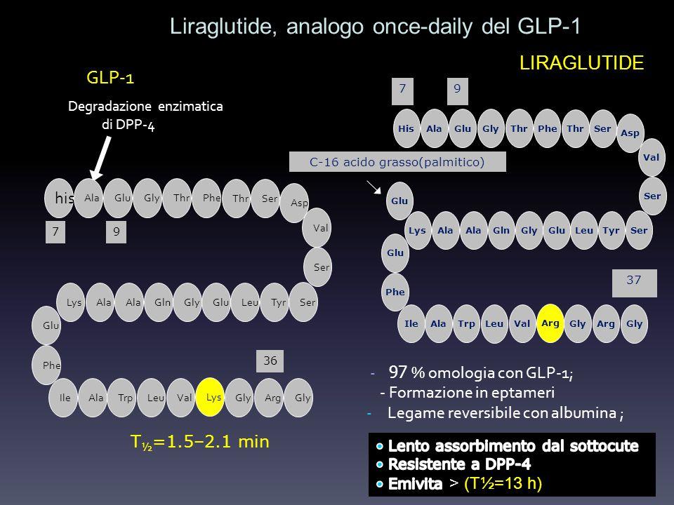 Liraglutide, analogo once-daily del GLP-1 GLP-1 T ½ =1.5–2.1 min Degradazione enzimatica di DPP-4 - 97 % omologia con GLP-1; - Formazione in eptameri