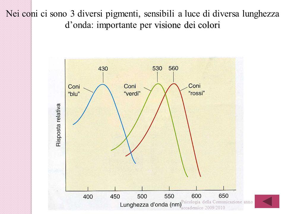 visione dei colori Nei coni ci sono 3 diversi pigmenti, sensibili a luce di diversa lunghezza d'onda: importante per visione dei colori Psicologia della Comunicazione anno accademico 2009/2010