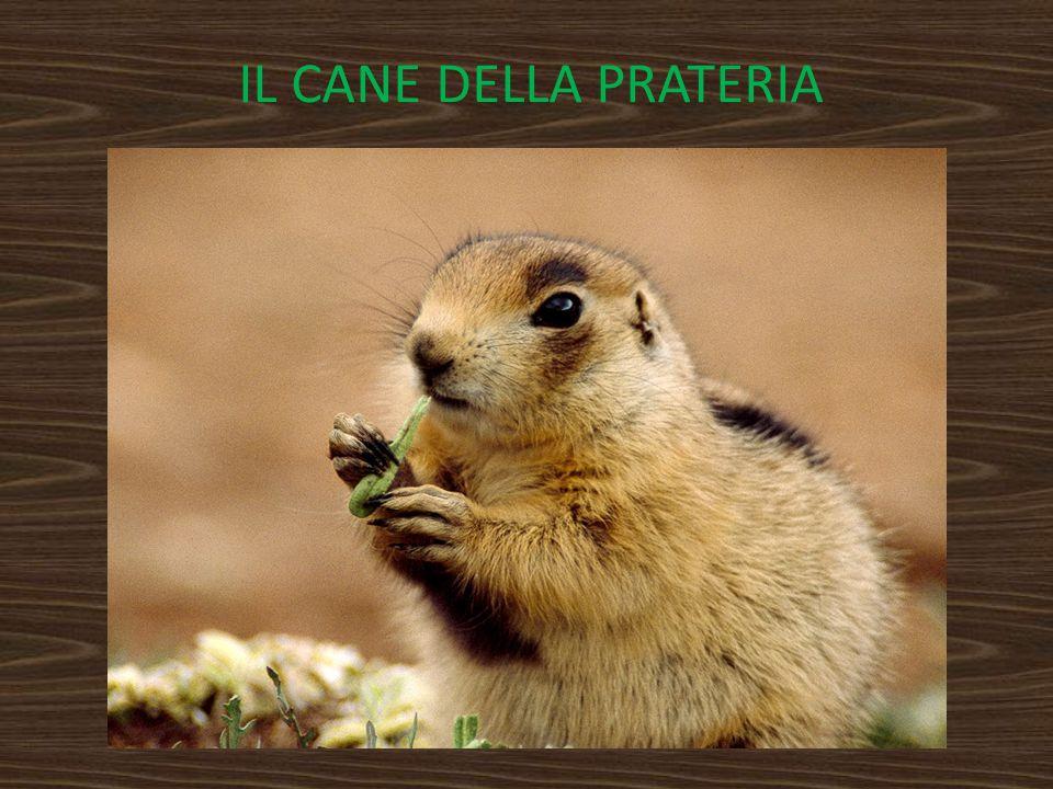 IL CANE DELLA PRATERIA