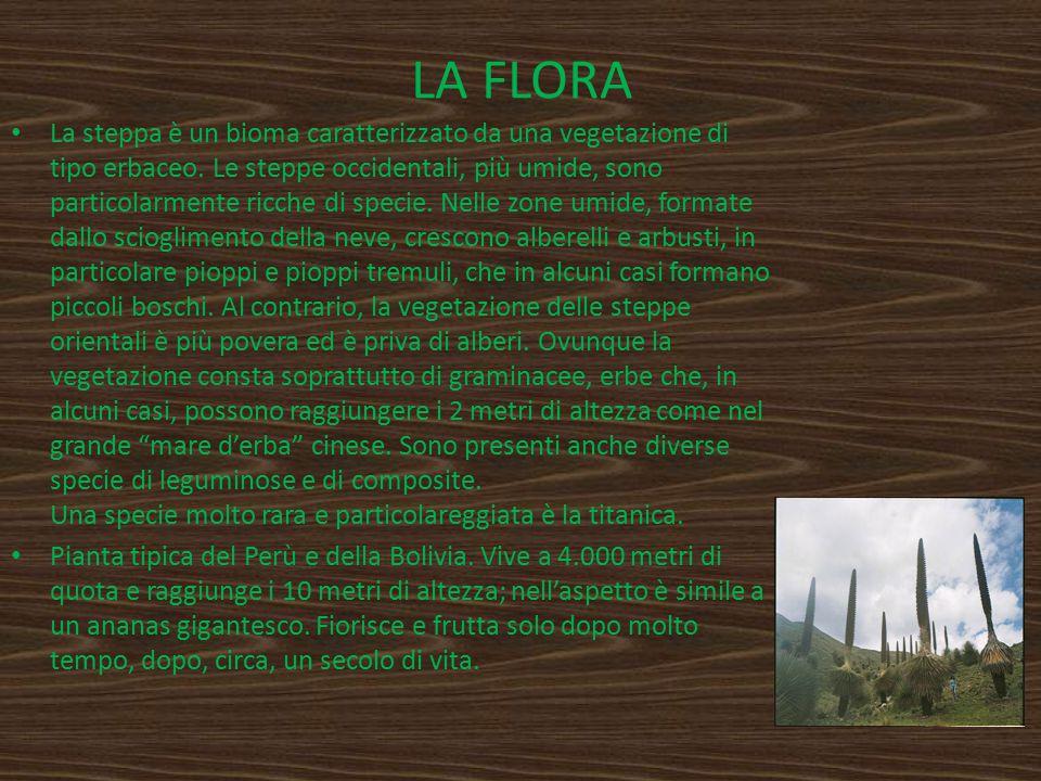 LA FLORA La steppa è un bioma caratterizzato da una vegetazione di tipo erbaceo. Le steppe occidentali, più umide, sono particolarmente ricche di spec