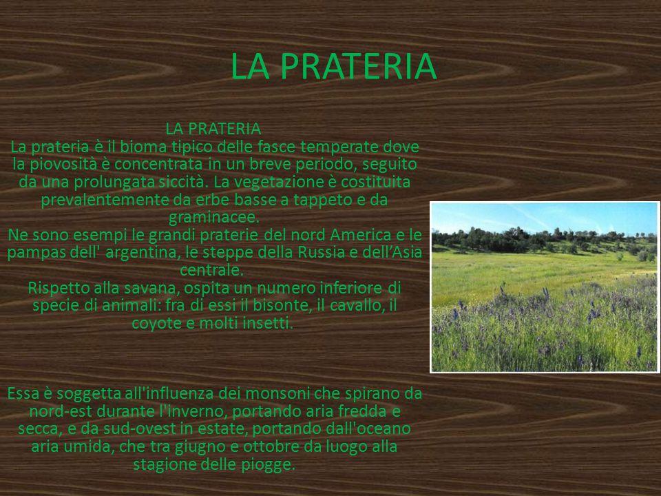 LA PRATERIA LA PRATERIA La prateria è il bioma tipico delle fasce temperate dove la piovosità è concentrata in un breve periodo, seguito da una prolun