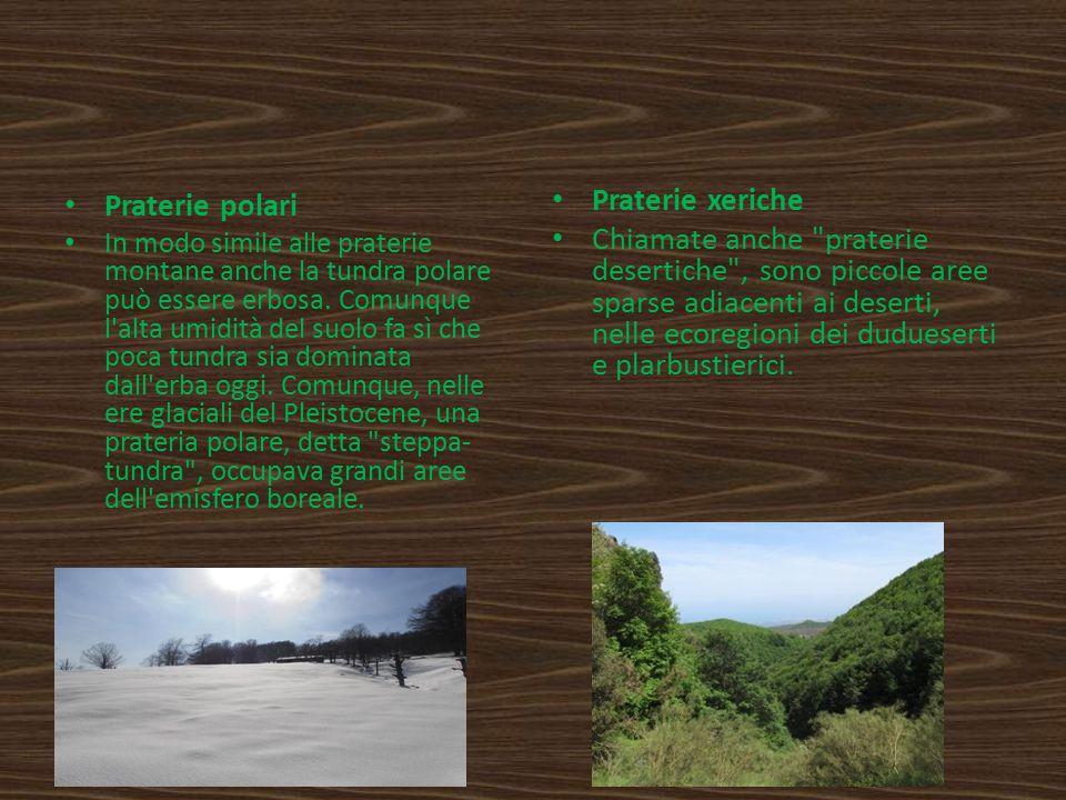 Praterie polari In modo simile alle praterie montane anche la tundra polare può essere erbosa. Comunque l'alta umidità del suolo fa sì che poca tundra