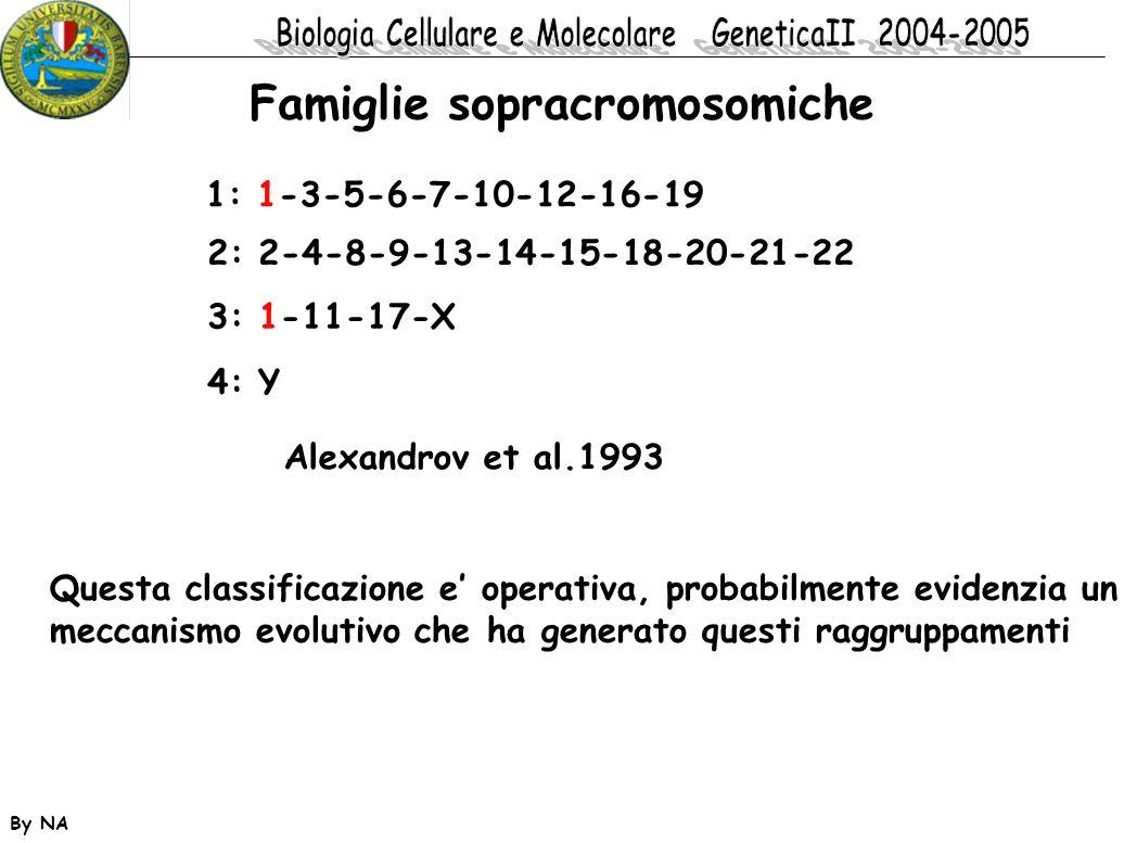 By NA Famiglie sopracromosomiche 1: 1-3-5-6-7-10-12-16-19 2: 2-4-8-9-13-14-15-18-20-21-22 3: 1-11-17-X 4: Y Alexandrov et al.1993 Questa classificazio