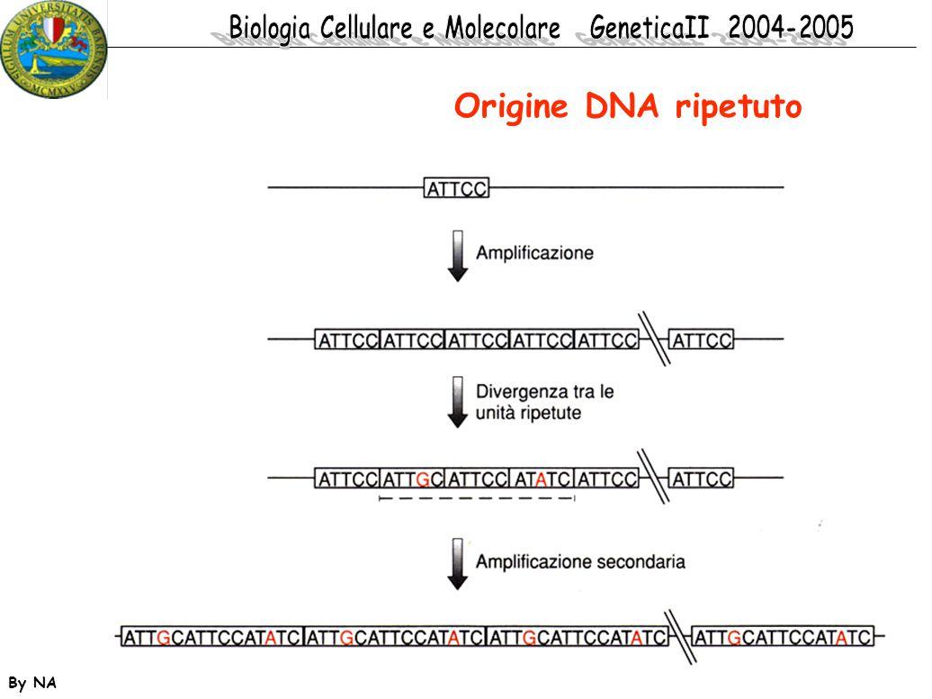 By NA Origine DNA ripetuto
