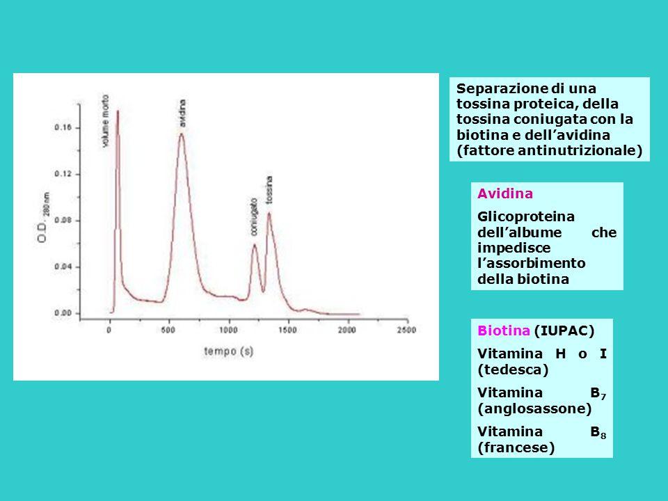 Separazione di una tossina proteica, della tossina coniugata con la biotina e dell'avidina (fattore antinutrizionale) Avidina Glicoproteina dell'album