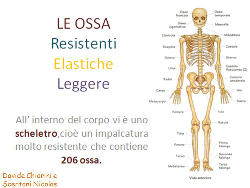 RESISTENTI ELASTICHE LEGGERE RESISTENTI: Alla compressione e alla trazione, cioè al trascinamento.