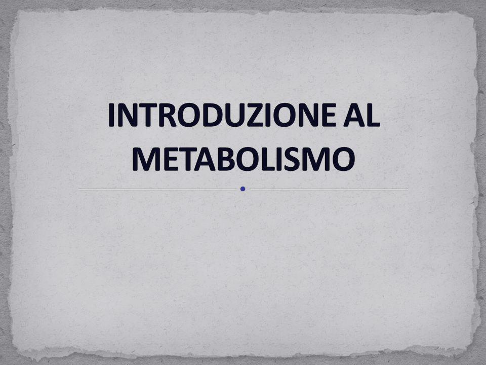 Il fegato ha un ruolo primario nel metabolismo energetico, che consiste nella sintesi e nella distribuzione di molecole di combustibile ad altri organi.