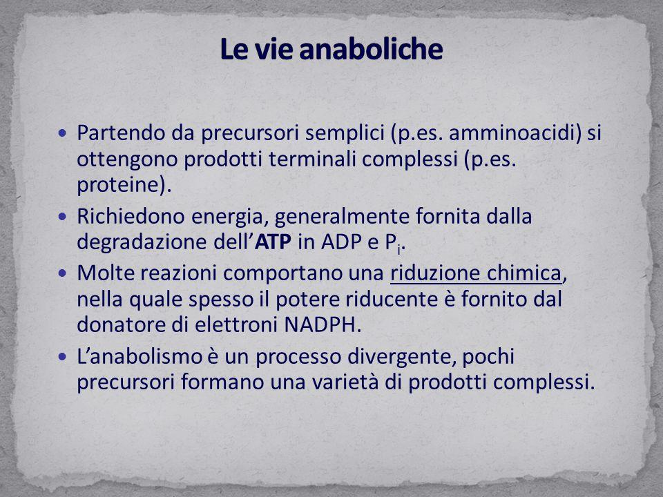 Partendo da precursori semplici (p.es. amminoacidi) si ottengono prodotti terminali complessi (p.es. proteine). Richiedono energia, generalmente forni