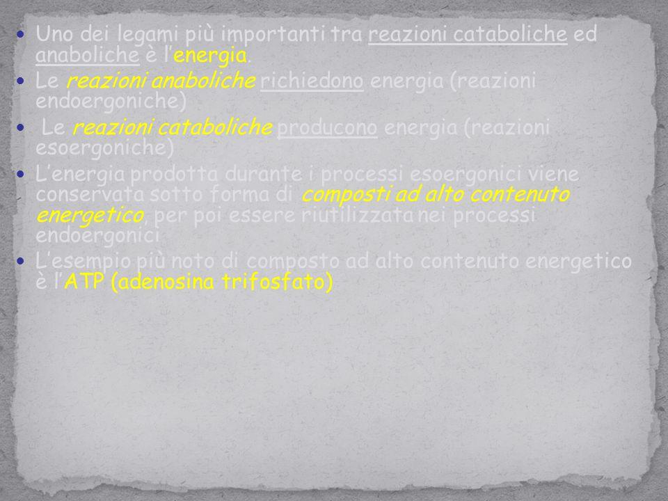 Uno dei legami più importanti tra reazioni cataboliche ed anaboliche è l'energia. Le reazioni anaboliche richiedono energia (reazioni endoergoniche) L