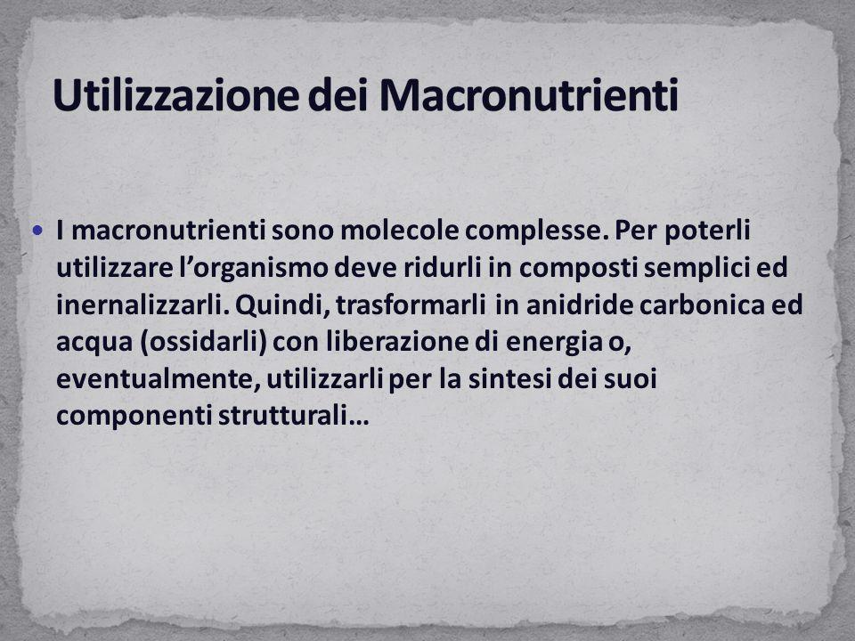 I macronutrienti sono molecole complesse. Per poterli utilizzare l'organismo deve ridurli in composti semplici ed inernalizzarli. Quindi, trasformarli