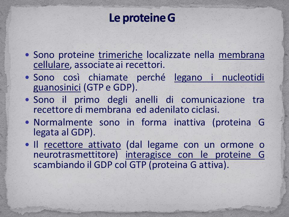 Sono proteine trimeriche localizzate nella membrana cellulare, associate ai recettori. Sono così chiamate perché legano i nucleotidi guanosinici (GTP