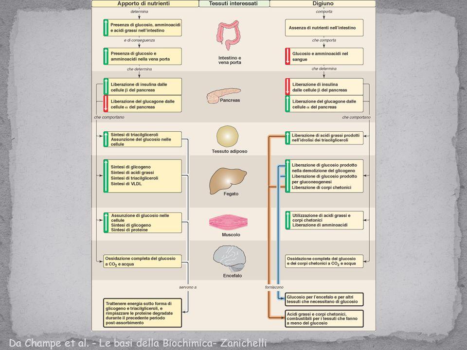 Da Champe et al. - Le basi della Biochimica- Zanichelli