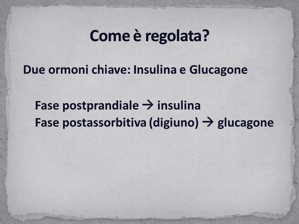 Due ormoni chiave: Insulina e Glucagone Fase postprandiale  insulina Fase postassorbitiva (digiuno)  glucagone