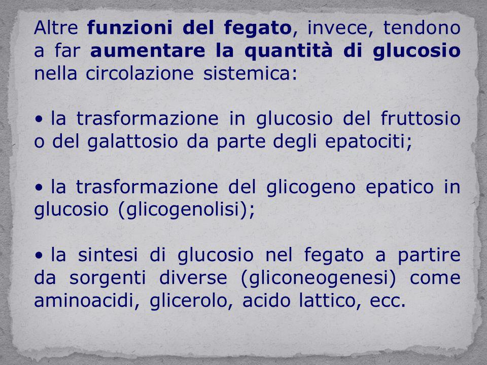 Altre funzioni del fegato, invece, tendono a far aumentare la quantità di glucosio nella circolazione sistemica: la trasformazione in glucosio del fruttosio o del galattosio da parte degli epatociti; la trasformazione del glicogeno epatico in glucosio (glicogenolisi); la sintesi di glucosio nel fegato a partire da sorgenti diverse (gliconeogenesi) come aminoacidi, glicerolo, acido lattico, ecc.