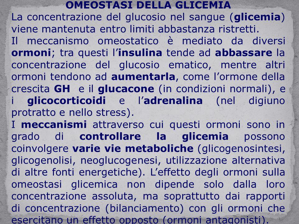 OMEOSTASI DELLA GLICEMIA La concentrazione del glucosio nel sangue (glicemia) viene mantenuta entro limiti abbastanza ristretti. Il meccanismo omeosta