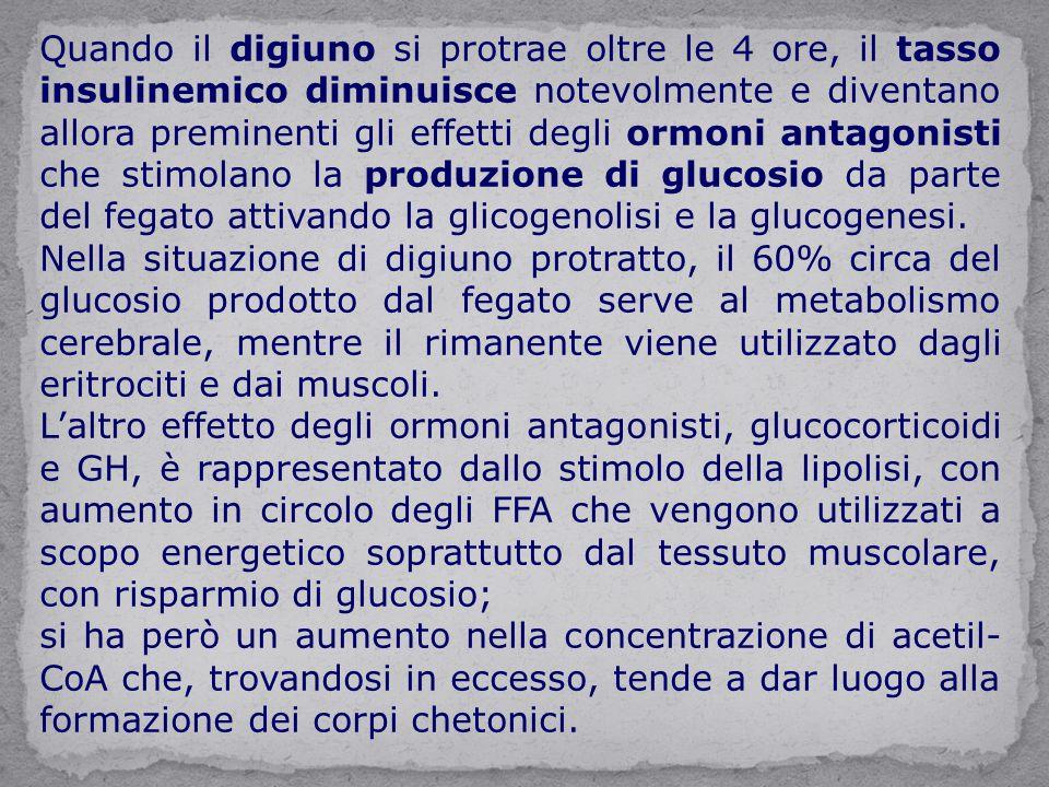 Quando il digiuno si protrae oltre le 4 ore, il tasso insulinemico diminuisce notevolmente e diventano allora preminenti gli effetti degli ormoni antagonisti che stimolano la produzione di glucosio da parte del fegato attivando la glicogenolisi e la glucogenesi.
