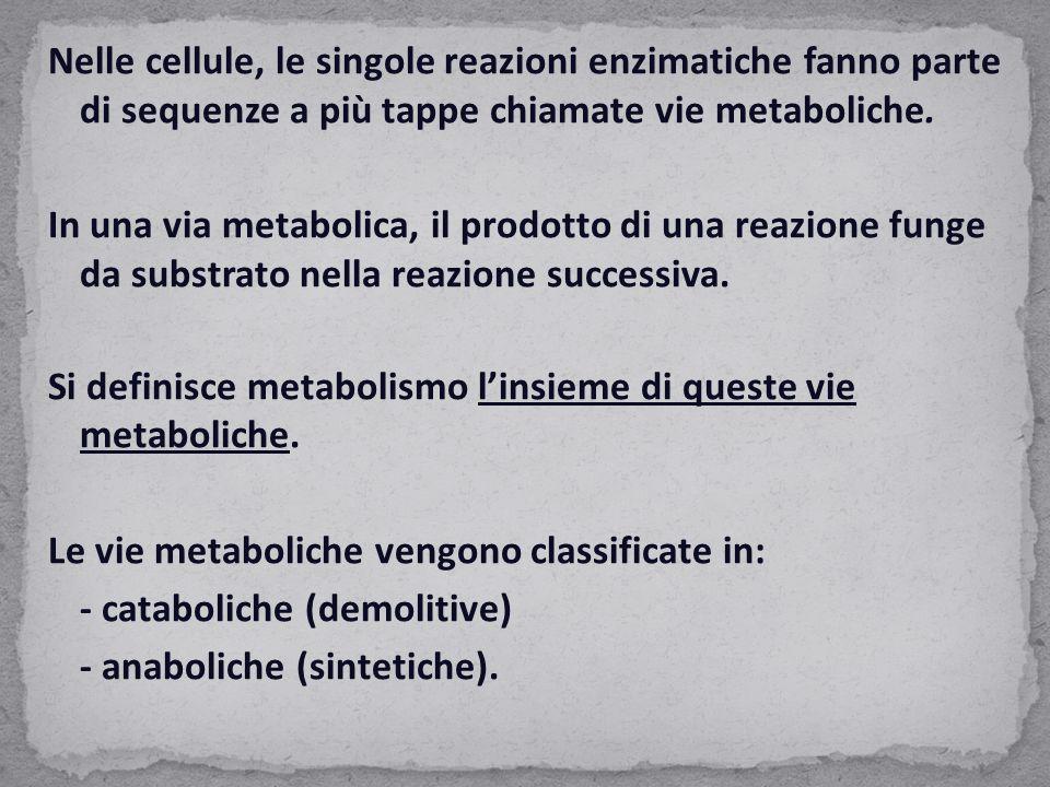 Nelle cellule, le singole reazioni enzimatiche fanno parte di sequenze a più tappe chiamate vie metaboliche. In una via metabolica, il prodotto di una