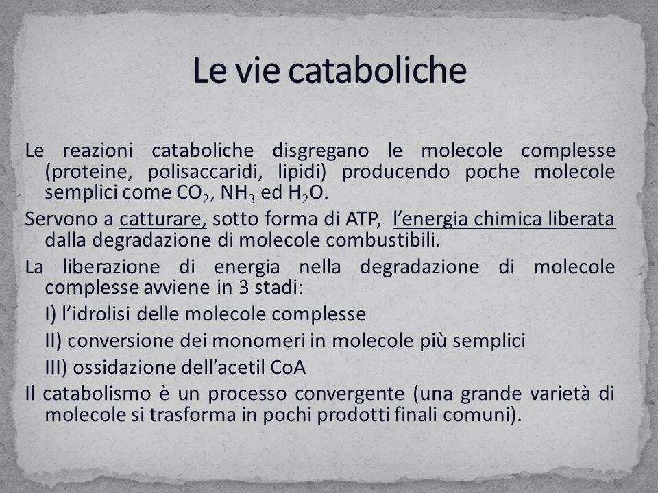 Le reazioni cataboliche disgregano le molecole complesse (proteine, polisaccaridi, lipidi) producendo poche molecole semplici come CO 2, NH 3 ed H 2 O