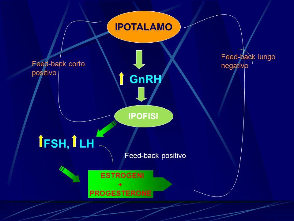 ESTROGENI + PROGESTERONE IPOFISI FSH, LH IPOTALAMO Feed-back lungo negativo Feed-back corto positivo Feed-back positivo
