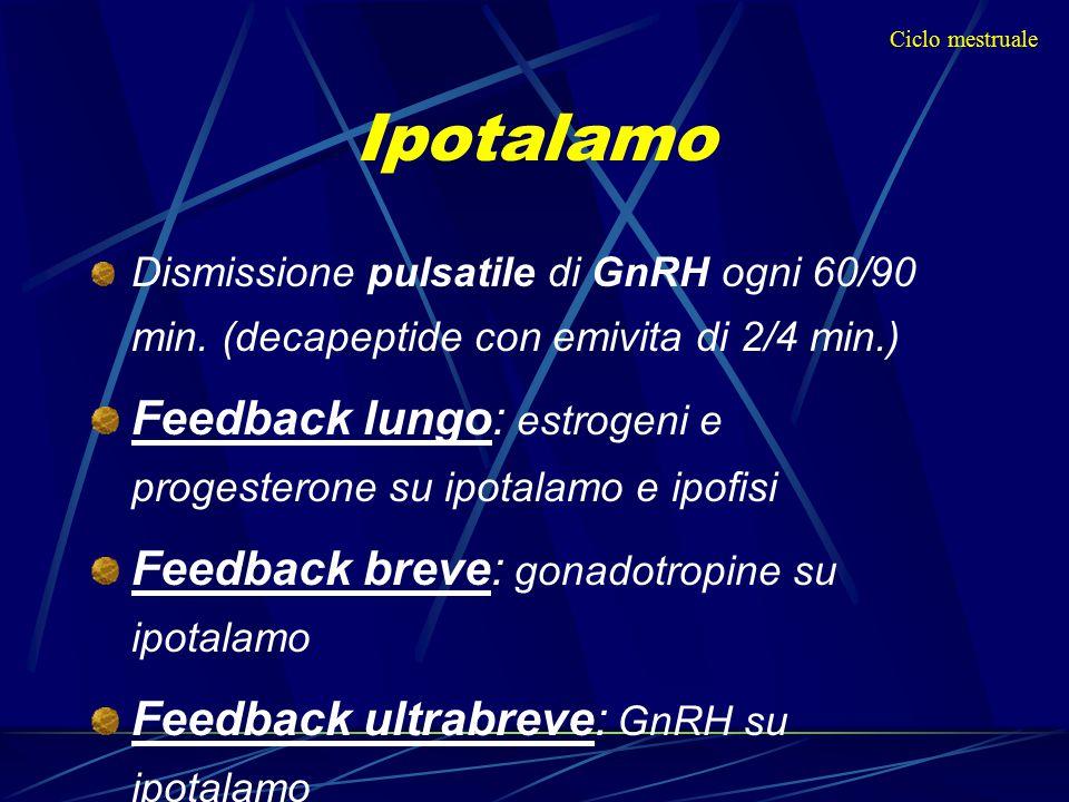 Dismissione pulsatile di GnRH ogni 60/90 min. (decapeptide con emivita di 2/4 min.) Feedback lungo: estrogeni e progesterone su ipotalamo e ipofisi Fe